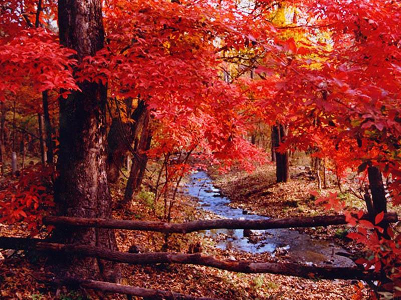 Mùa thu Trung Quốc và những điểm du lịch siêu đẹp