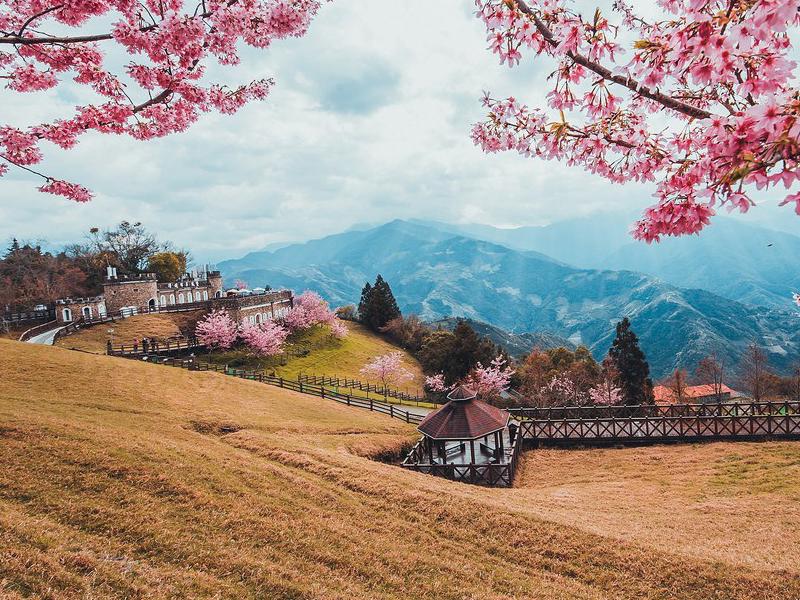 Du lịch Đài Loan vào mùa xuân thích hợp để ngắm hoa anh đào