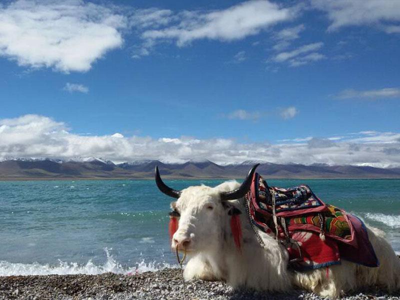 Chi phí cần mang theo khi du lịch Tây Tạng