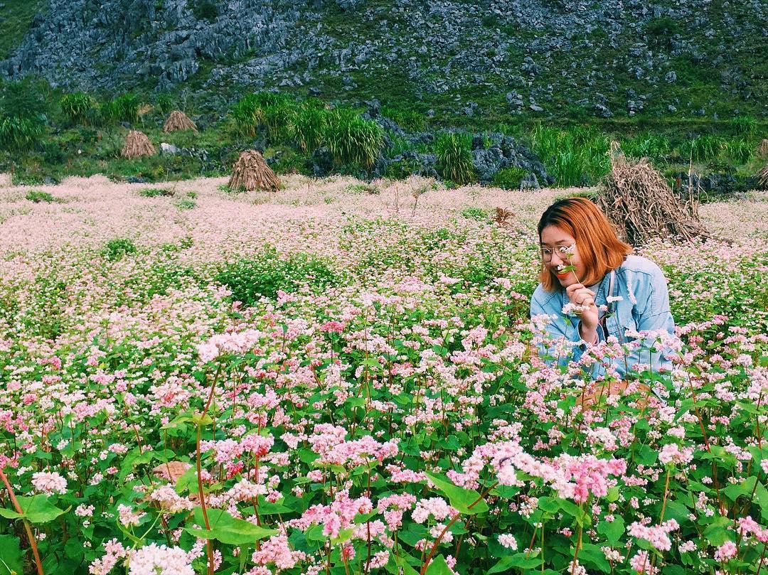 Tour du lich mien bac - Du lich mien bac đi Hà Giang ngắm mùa hoa tam giác mạch