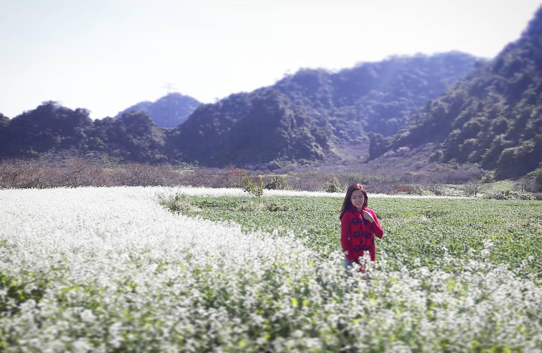 Tour du lịch miền Bắc - Tham gia tour miền Bắc đến Mộc Châu mùa hoa cải trắng