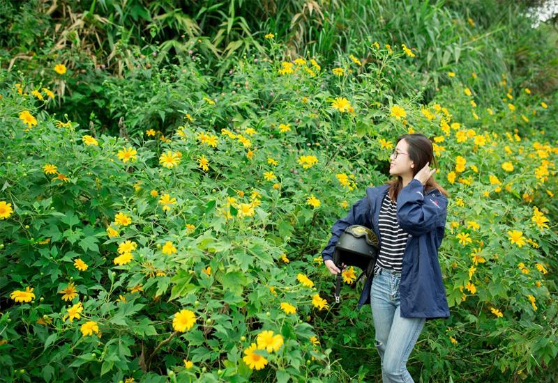 du lịch mùa hoa dã quỳ Đà Lạt