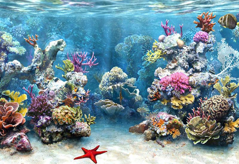 Lặn biển ngắm san hô khi đi du lịch Nha Trang lễ 2/9