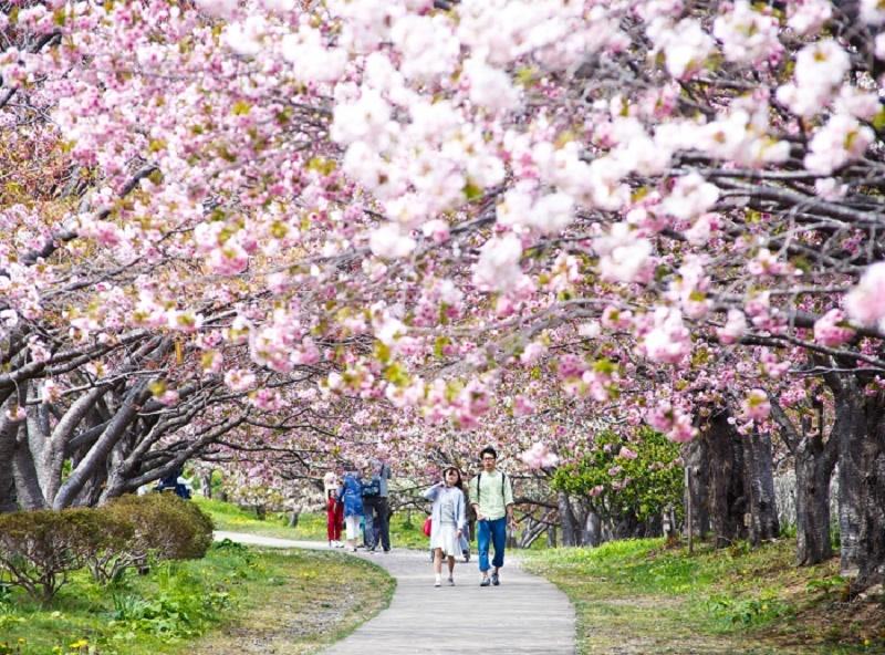 Du lịch Nhật Bản mùa hoa Anh Đào và những địa điểm ngắm hoa tuyệt đẹp