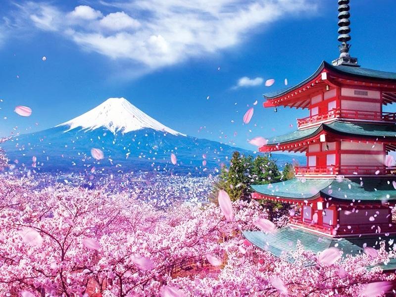 Cẩm nang du lịch Nhật Bản mùa hoa Anh Đào dành cho người đi tự túc