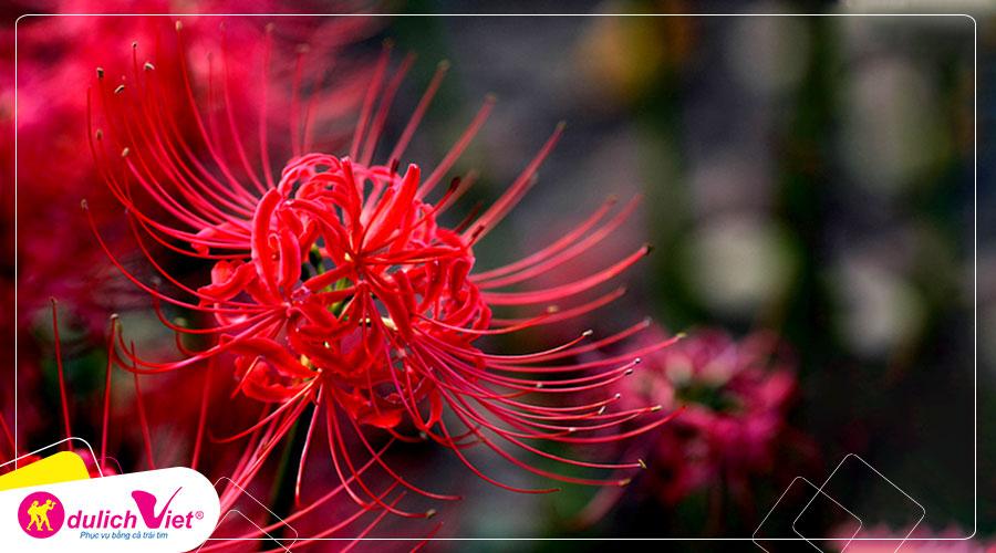 Hoa Bỉ Ngạn tượng trưng cho sự chia cách