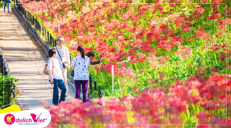Hoa Bỉ Ngạn rực rỡ sắc màu