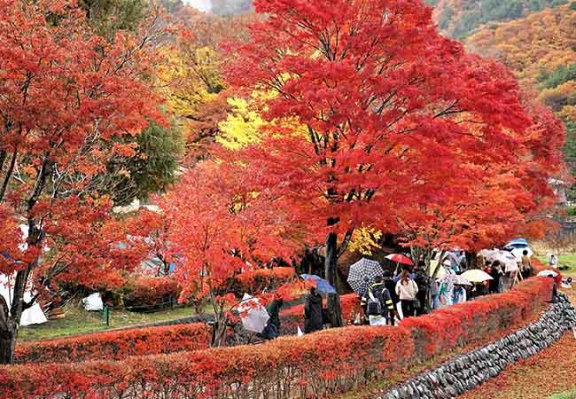 Cảm nhận được sự nhiệt tình của người bản xứ khi du lịch tại Nhật Bản