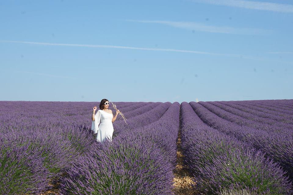 Du lịch Châu Âu - Nở rộ sắc tím cùng hoa tại Provence – Pháp
