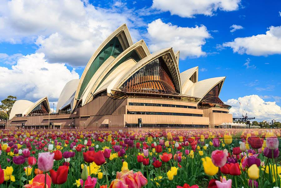 Mùa Xuân Úc tràn ngập sắc hoa