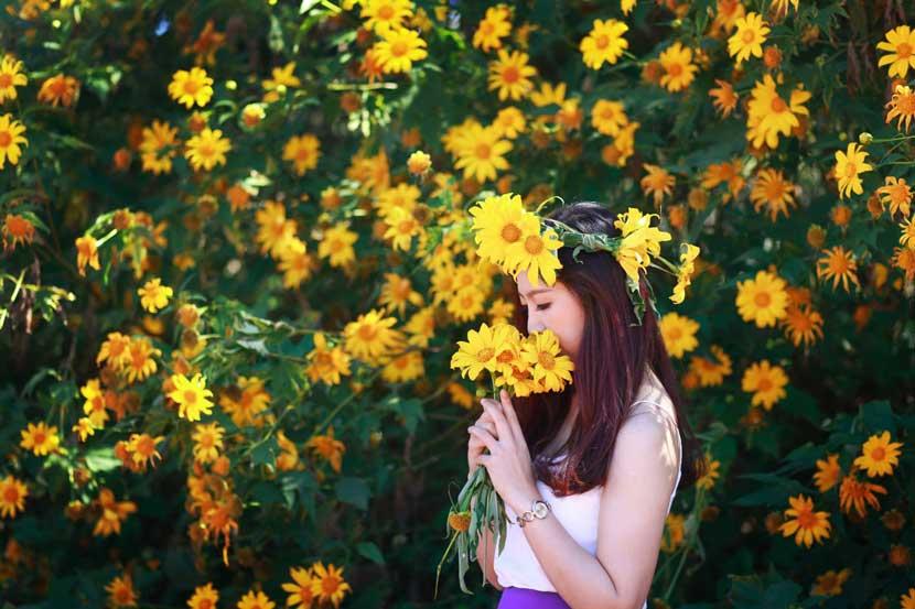 Mùa hoa dã quỳ Đà Lạt ở đồi thông Châu Sơn