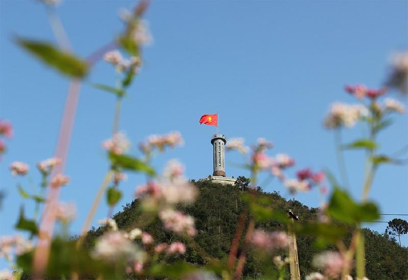 mùa hoa tam giác mạch bên cột cờ Lũng Cú