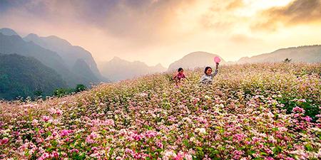 Du Lịch Đông Bắc - Hà Giang 5 ngày đẹp ngỡ ngàng mùa hoa tam giác mạch