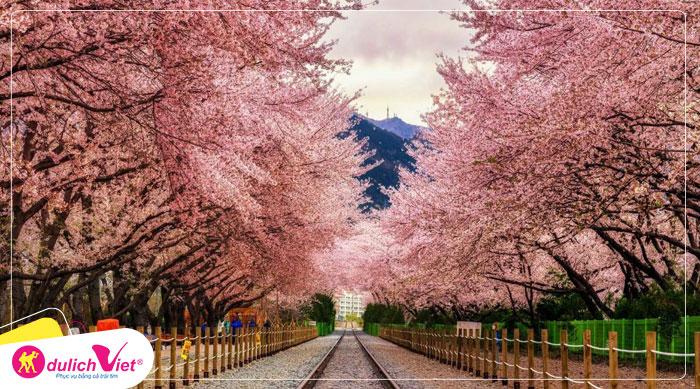 Du lịch Hàn Quốc mùa hoa Anh Đào Seoul - Everland - Đảo Nami từ Hà Nội 2020