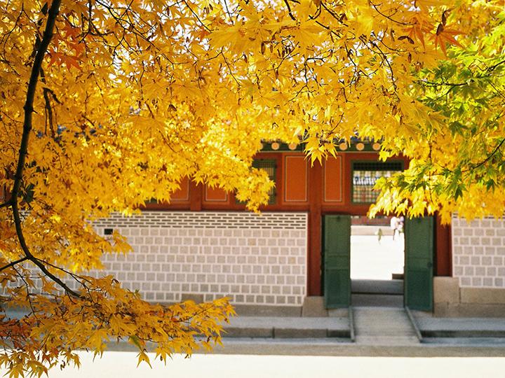 Du lịch Nhật Bản mùa lá đỏ 6 ngày giá tốt khởi hành từ Hà Nội