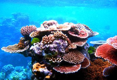 Coral - Thiên đường ngủ quên tại Thái Lan