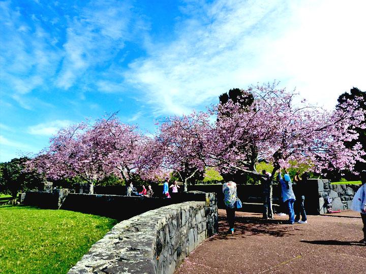 Du lịch Nhật Bản mùa hoa anh đào 6 ngày giá tốt từ Hà Nội 2017-VITM