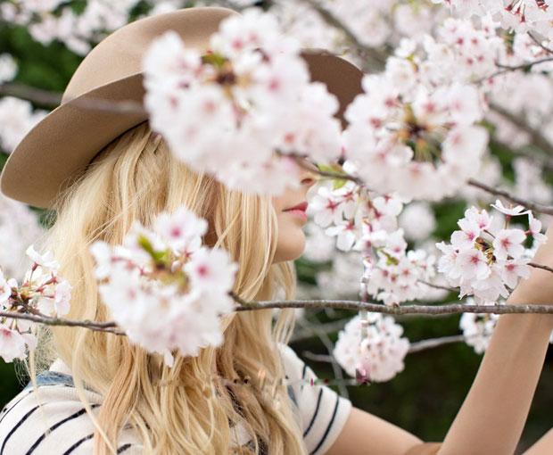 Du lịch Mỹ lễ hội hoa anh đào Washington D.C năm 2017 từ Hà Nội