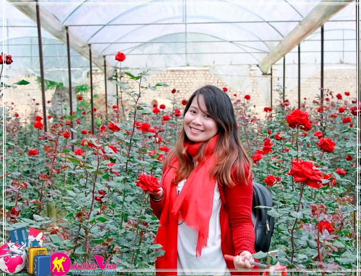 Du Lịch Đà Lạt 3 ngày mùa hoa Dã Quỳ 2017 giá tốt (T11/2017)