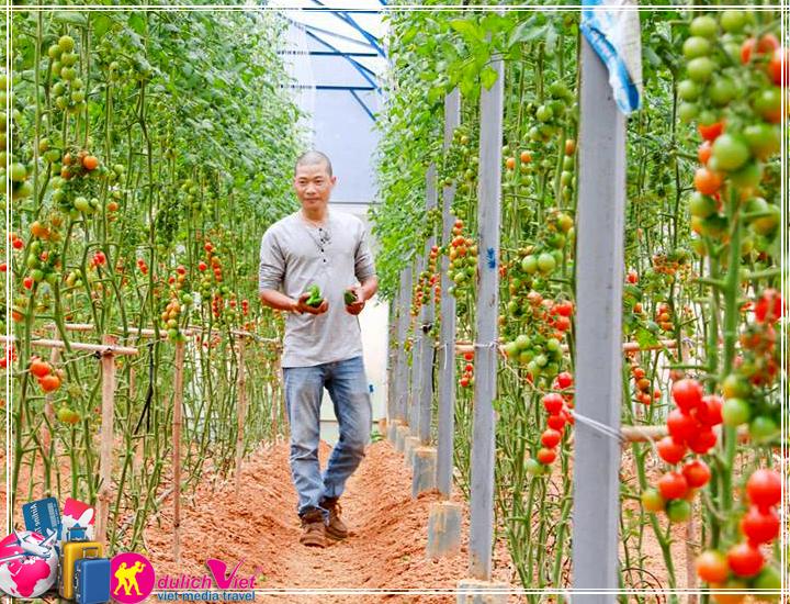 Du lịch Đà Lạt - trải nghiệm mới với nông trại Đà Lạt dịp Giỗ Tổ 10/03