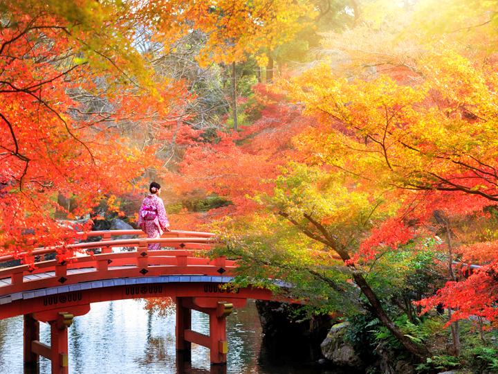 Nét trầm mặc, cổ kính của mùa thu Nhật Bản
