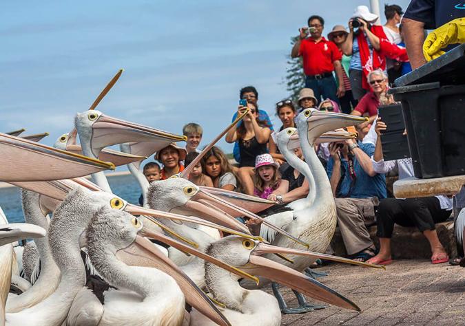 Giảm 3 triệu đồng Du lịch Úc dịp Tết Nguyên Đán