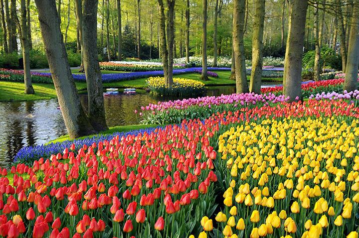 Điều thú vị tại lễ hội hoa Keukenhof Hà Lan 2017