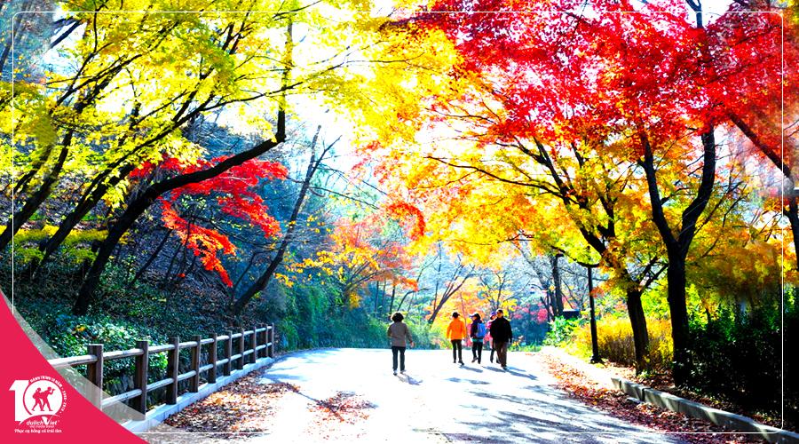 Tour du lịch Hàn Quốc mùa Thu 2018 từ Sài Gòn giá tốt