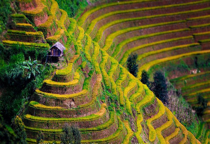 Ruộng bậc thang Yên Bái - La Pán Tẩn