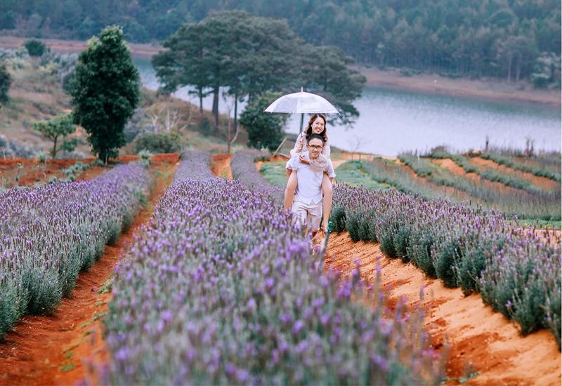 cánh đồng hoa lavender bên hồ tuyền lâm