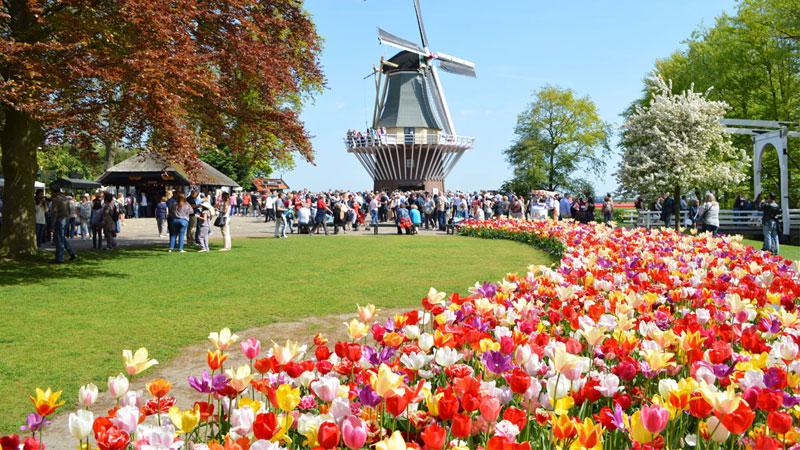 Lễ hội hoa tại vườn hoa Keukenhof - Hà Lan vào mùa xuân