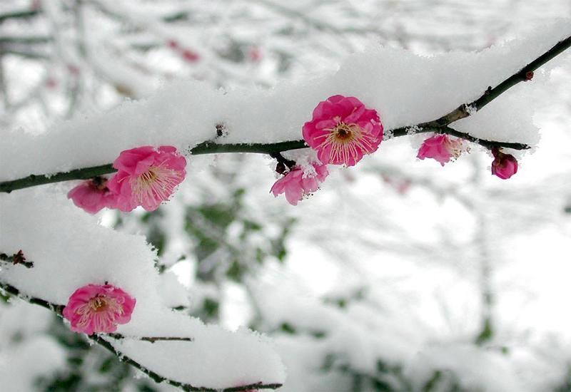 Trải nghiệm cái lạnh của những đợt tuyết rơi vào dịp tết dương lịch