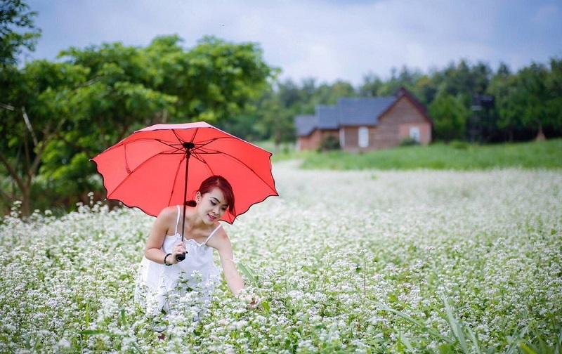 Mùa hoa tam giác mạch đến là thời điểm những cô cậu miền xuôi tìm lên để