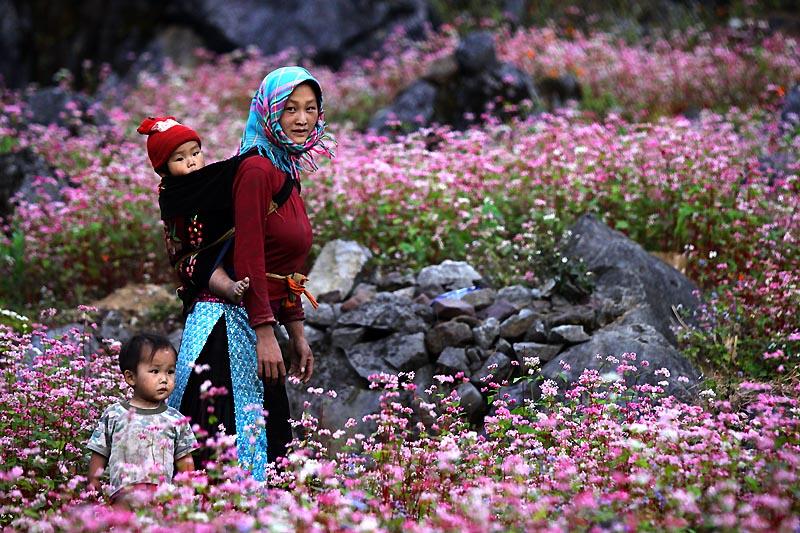 Ngắm đồi hoa tam giác mạch nổi tiếng khi đến với Hà Giang