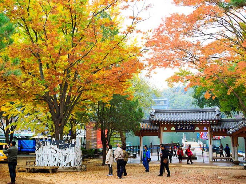 Khung cảnh mùa thu ở Đảo Nami, Hàn Quốc