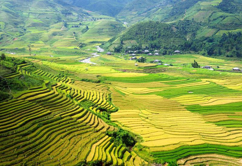 Ruộng bậc thang Yên Bái đẹp rực rỡ với sắc vàng lúa chín Mua-vang-yen-bai-ruong-bac-thang