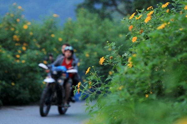 đi du lịch mùa hoa dã quỳ Đà Lạt