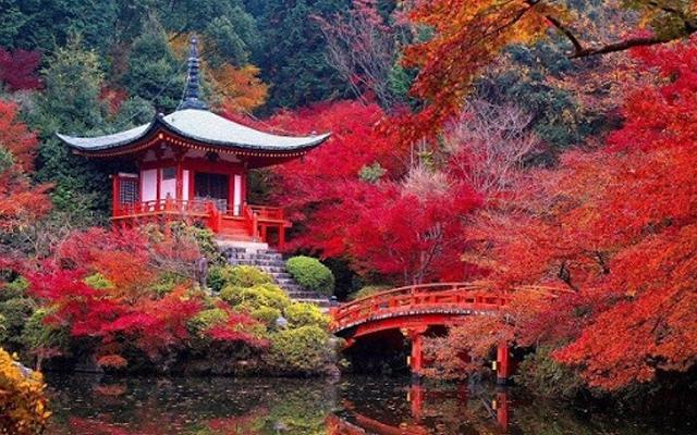 Những địa điểm để ngắm lá phong đỏ đẹp nhất tại Việt Nam