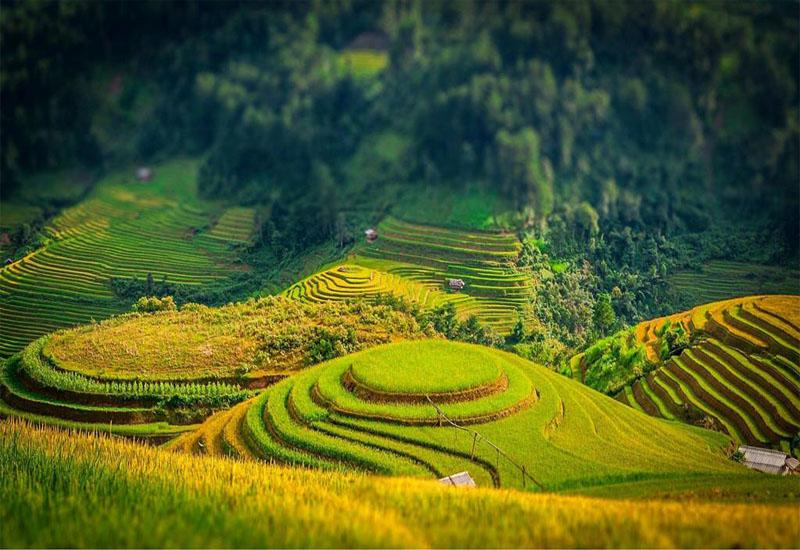 Vẻ đẹp của mùa lúa chín Tây Bắc về trên những thửa ruộng bậc thang