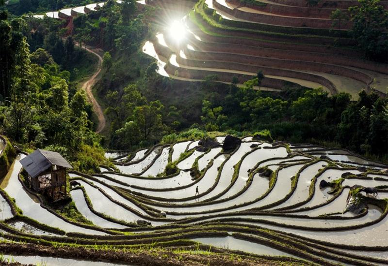 ruộng bậc thang Yên Bái mùa nước đổ