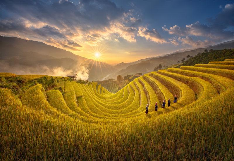 Ruộng bậc thang Yên Bái - Mù Cang Chải