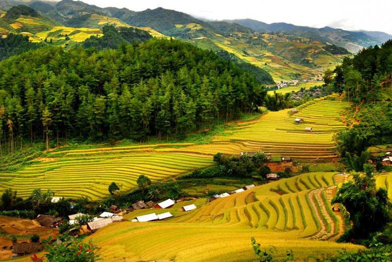 Mùa lúa chín Tây Bắc – tuyệt tác thiên nhiên dưới bàn tay con người Ruong-bac-thang-pu-luong