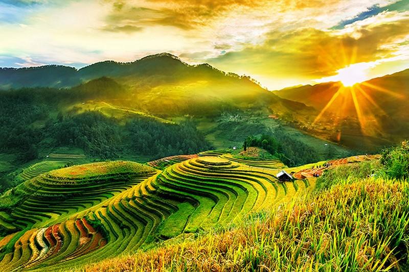Vẻ đẹp ánh bình minh trên những thửa ruộng bậc thang vào mùa lúa chín Tây Bắc