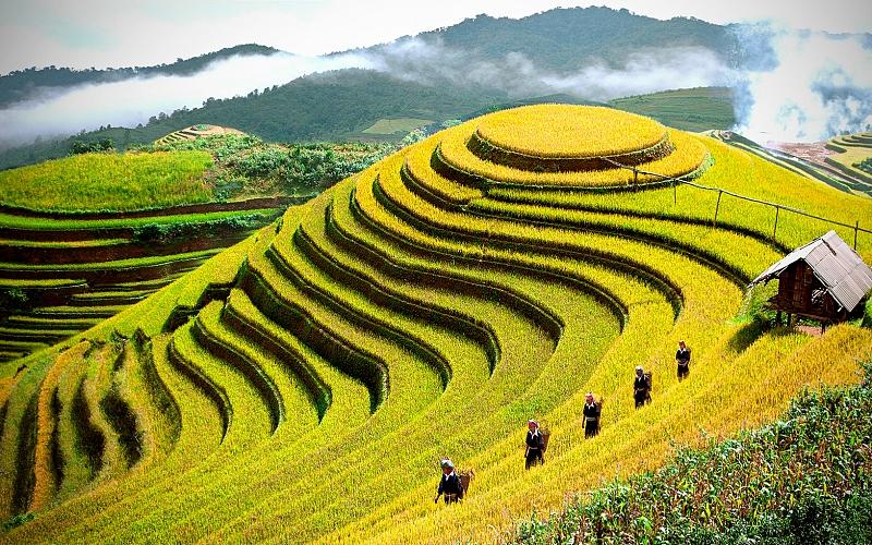Vẻ đẹp cánh đồng ruộng bậc thang Sapa