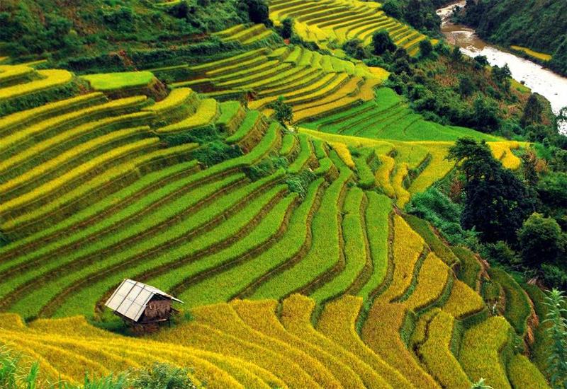 Vẻ đẹp của ruộng bậc thang Yên Bái không đơn thuần là vẻ đẹp của thiên nhiên