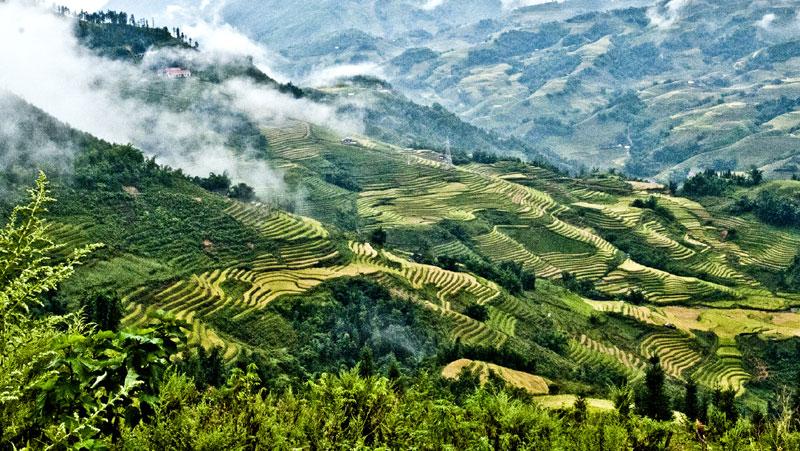 Ruộng bậc thang Yên Bái đẹp rực rỡ với sắc vàng lúa chín Ruong-bac-thang-yen-bai-mu-cang-chai