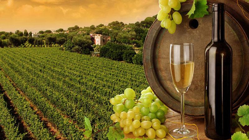 Du khách sẽ vấn vương Úc khi thưởng thức một ly rượu vang tại đây