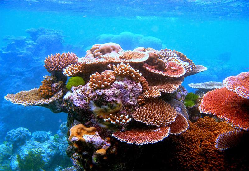rạn san hô Cát Bà