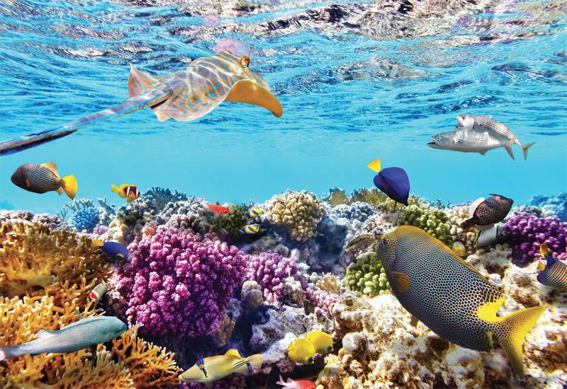 Lặn ngắm san hô ở Vịnh Ninh Vân