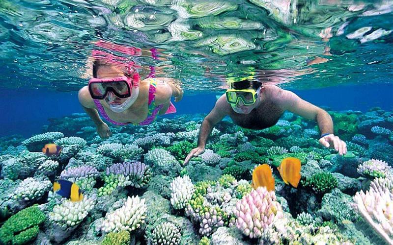 Những rặng san hô rực rỡ tại Hòn Mun